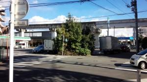 桜が丘4丁目交差点の植木-before